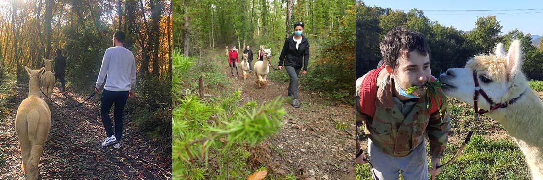 Alpaca Trekking con Albus Alpacas