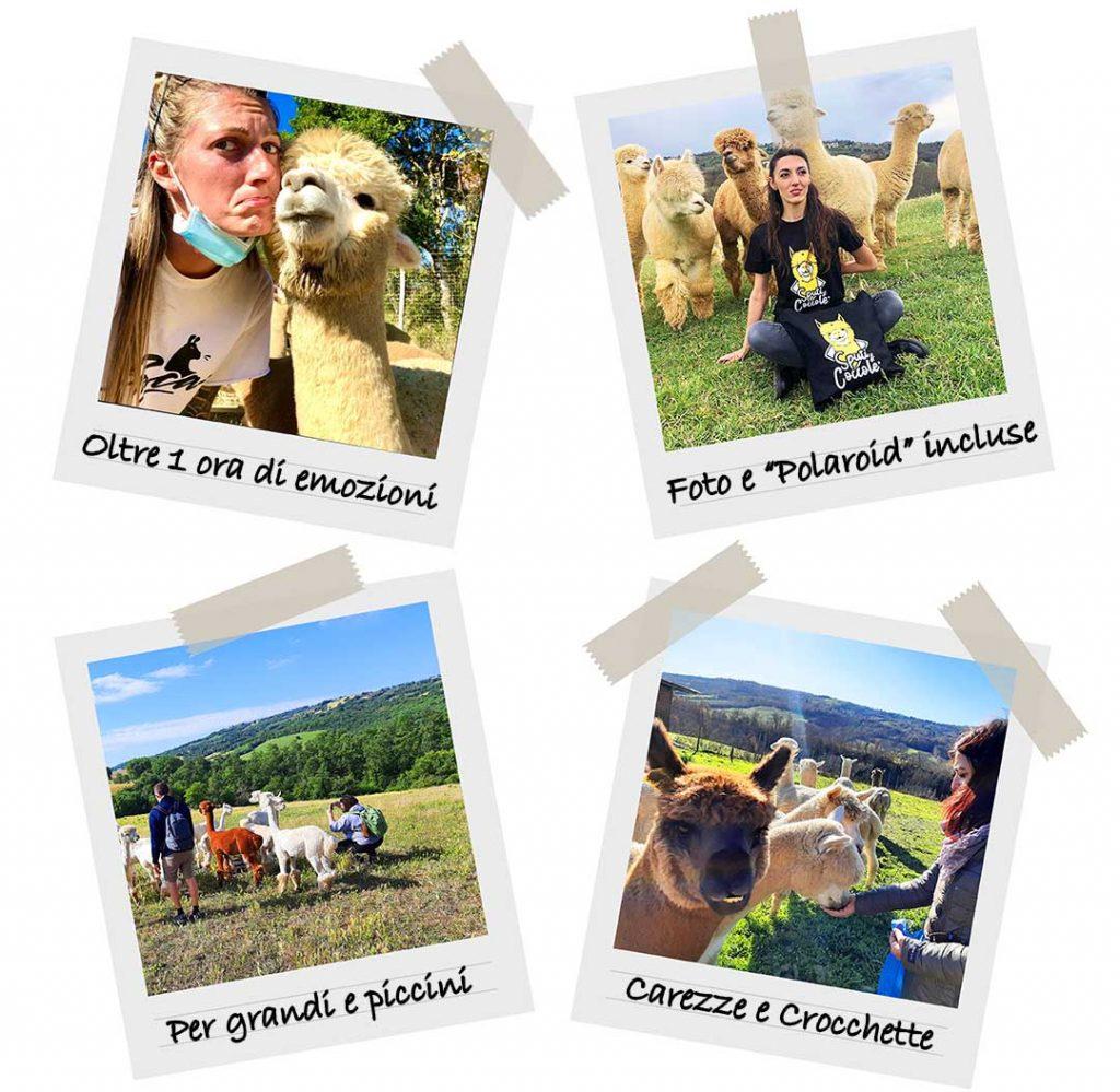 Esperienza Alpaca Albus Alpacas Toscana