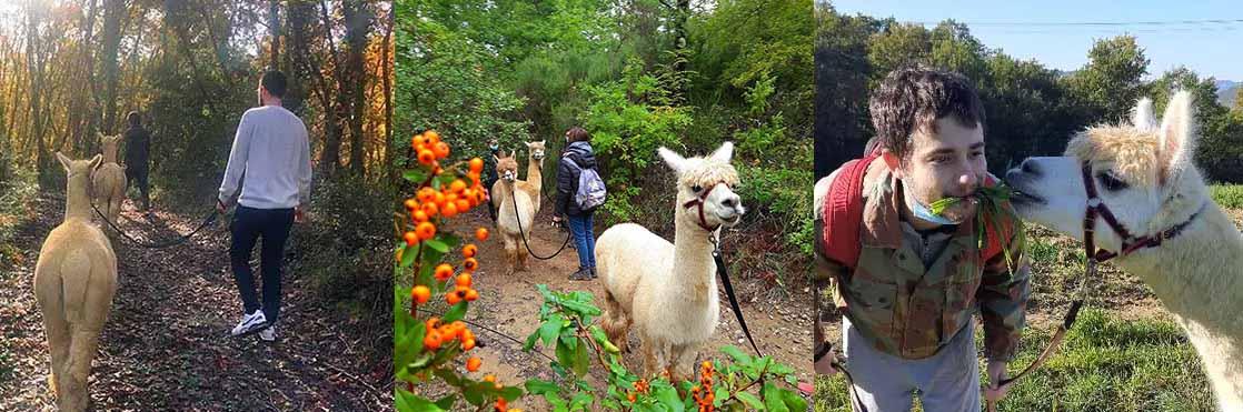 trekking con alpaca
